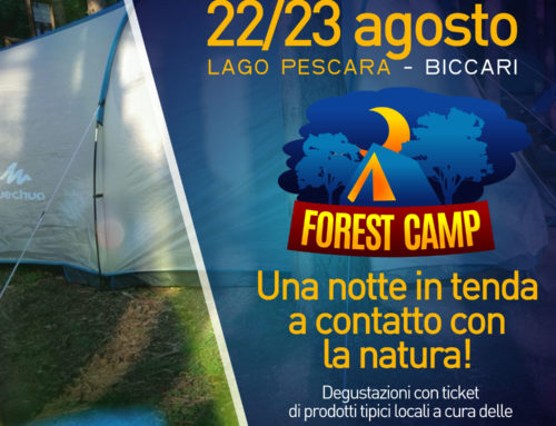 Forest Camp 2020